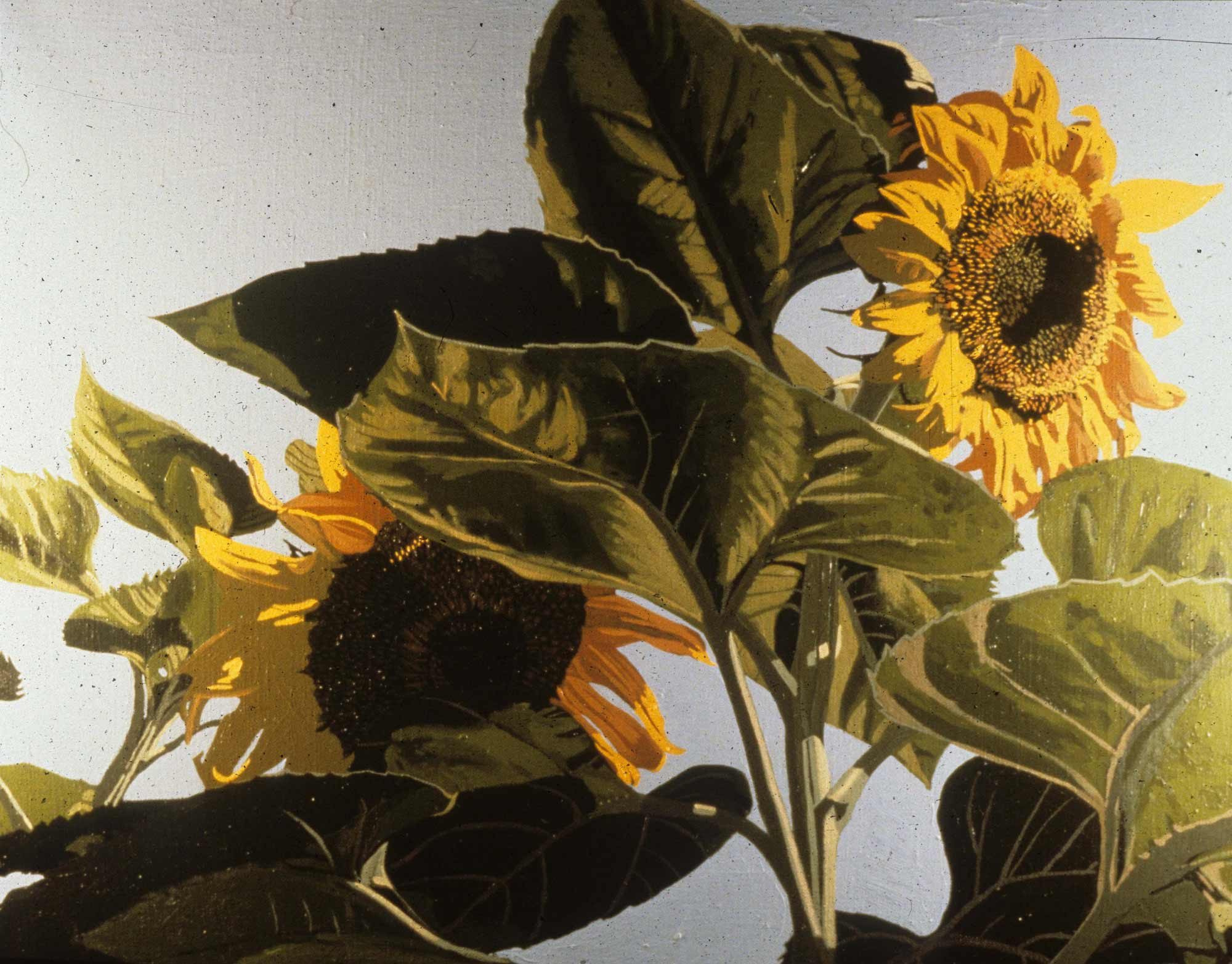 Mary's Sunflowers 2