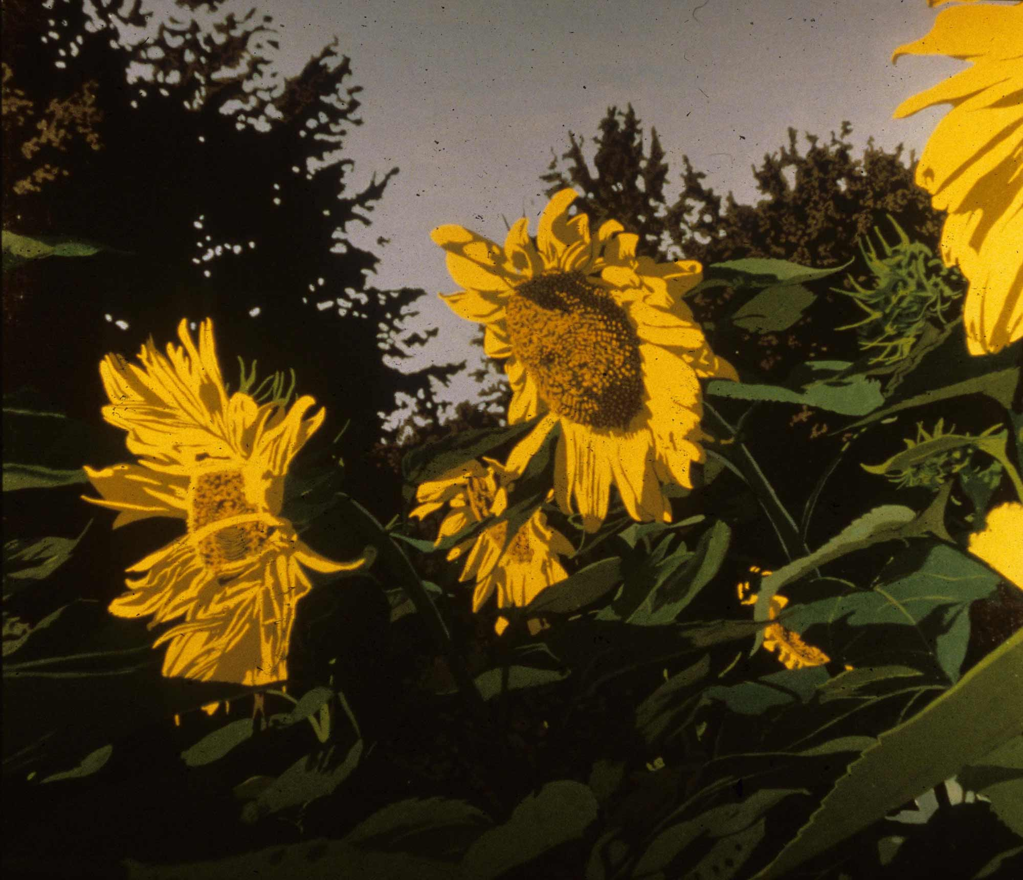 Mary's Sunflowers